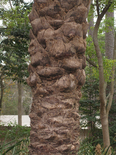 DatePalmTrunk