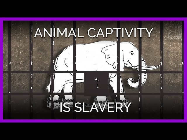 animal captivity The importance of keeping certain wild animals in captivity is underscored by the viral stardom of a rescued baby sea otter named luna and the problems the.