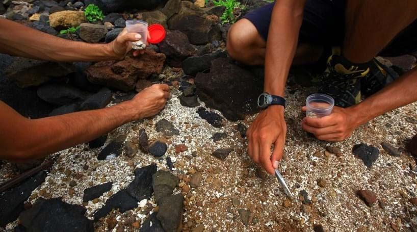 Descoberto na Lourinhã um dos maiores trilhos mundiais de pterossauros