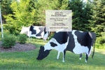 3D Cows Large Yard Art Woodworking Pattern - fee plans from WoodworkersWorkshop® Online Store - cows,on the farm,dairy,3D,yard art,painting wood crafts,scrollsawing patterns,drawings,plywood,plywoodworking plans,woodworkers projects,workshop blueprints