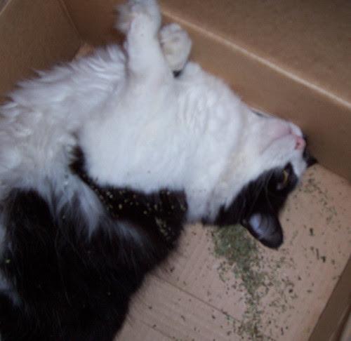 This is your Smidge on drugs 3