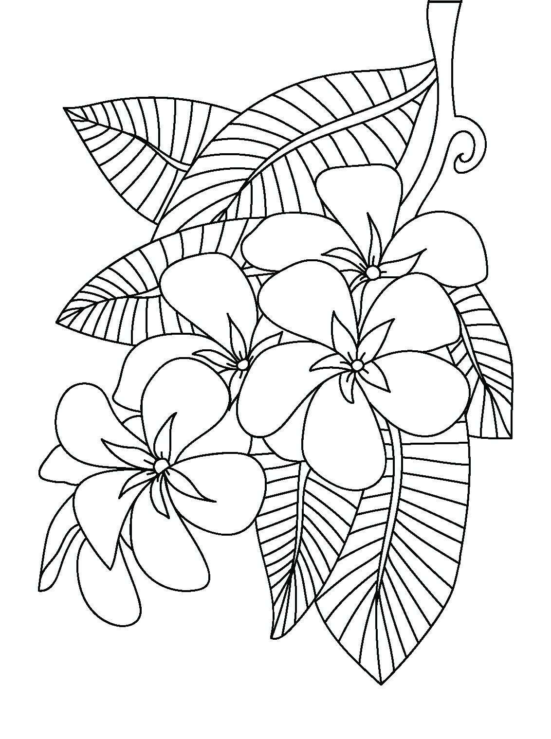 Plumeria Flower Coloring Pages at GetColorings.com | Free ...