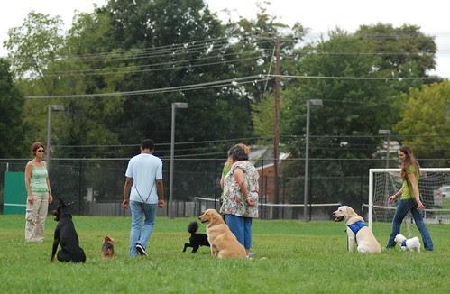 Little Dogs Weaving Big Dogs