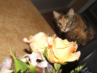 trying to eat my flowers - every chance she can