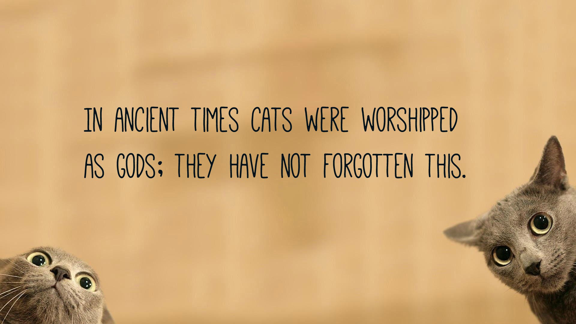 Cat Quotes Text Image Quotes Quotereel