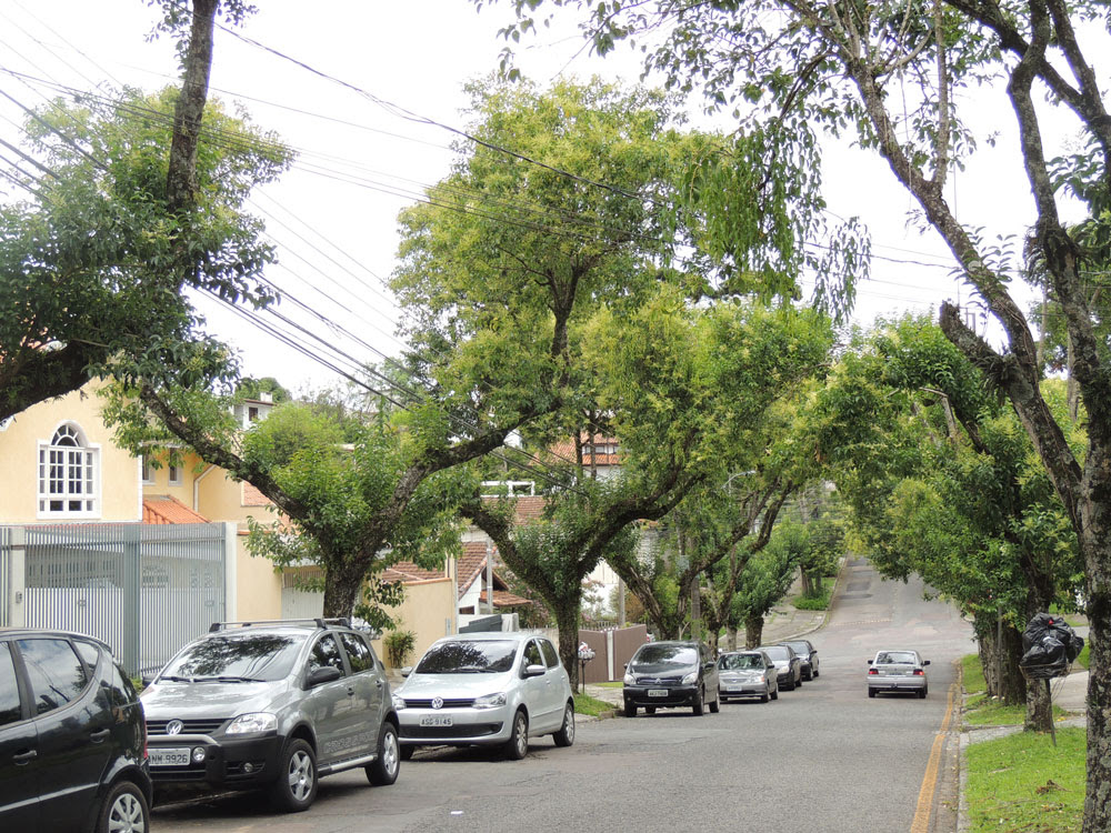Ruas de Curtiba ainda mantêm espécies exóticas invasoras. Foto: Nicholas Kaminski