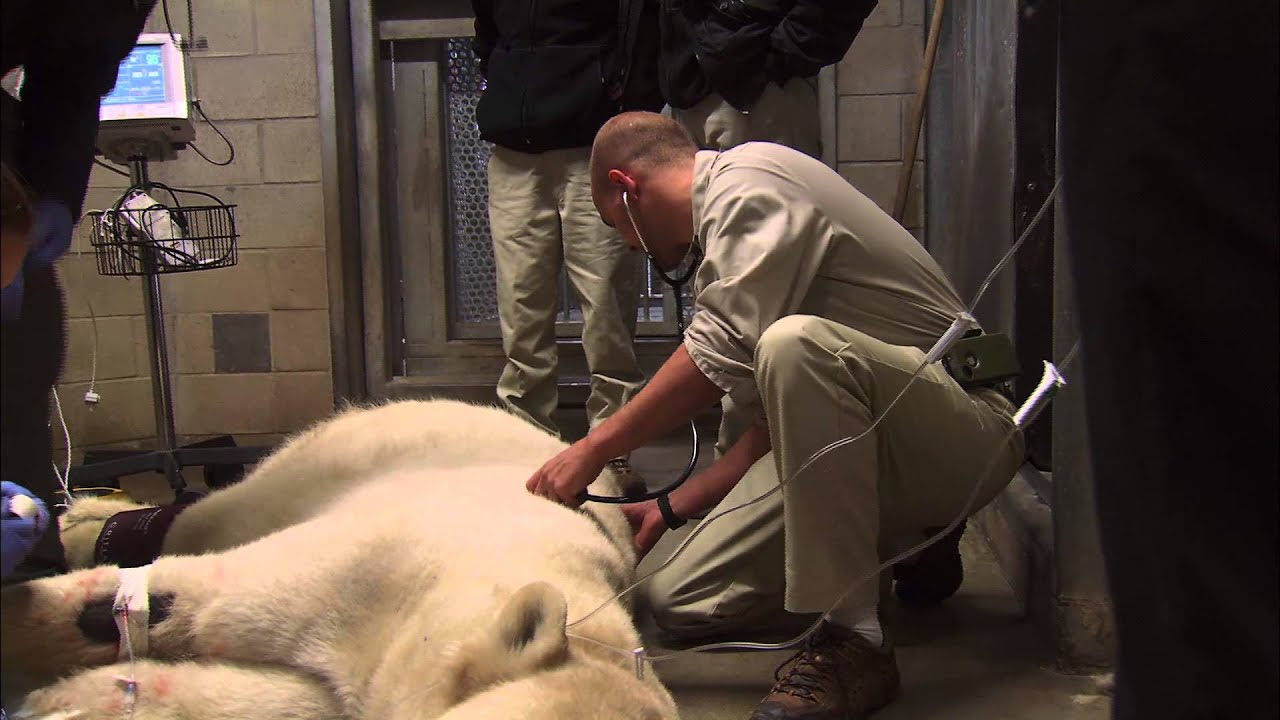 A Day in the Life of a San Diego Zoo Veterinarian - YouTube