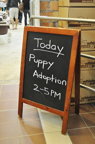 pup adoption