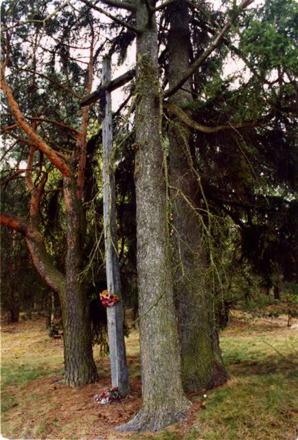 Krzyż przed Wierzchowiskami (od strony wschodniej). Sąsiedztwo potężnych i pięknych drzew świadczy o starannym wyborze miejsca posadowienia krzyża. Fot wrzesień 2005 r.