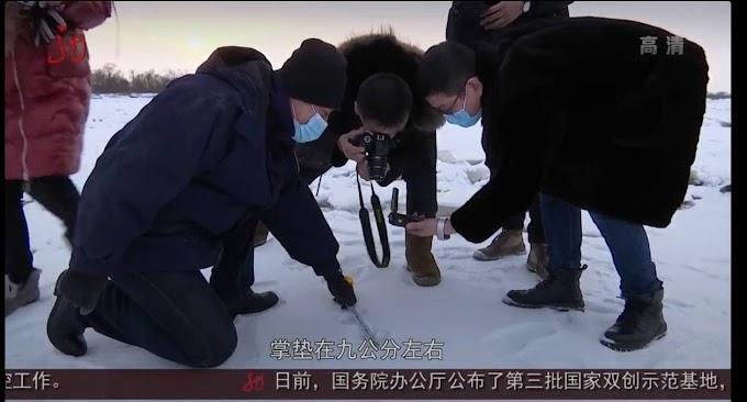 Перешел границу у реки: следы молодого тигра обнаружили на льду китайс