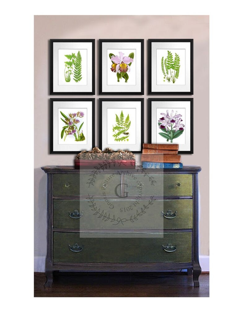 Set of Botanical Prints Ferns Orchids set of 6 Living room ...