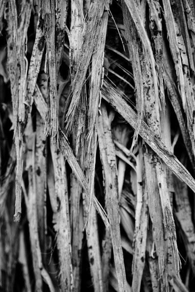 Joshua Tree National Park   Winter 2010   Joshua Tree, CA