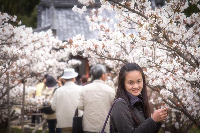 Sakura at Ninnaji Temple