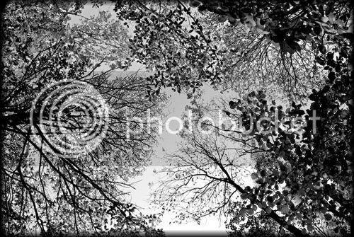 cimes arbres bois photo
