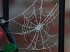 Web of ice