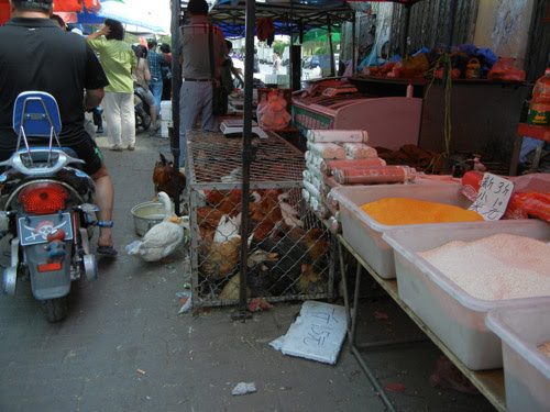 Live Ducks and Chickens in Cage in Farmer's Market, Shenyang, China _ 0440