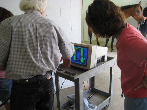 Using a Thermographic Camera to Treat a Horse