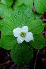 White Wet Flower