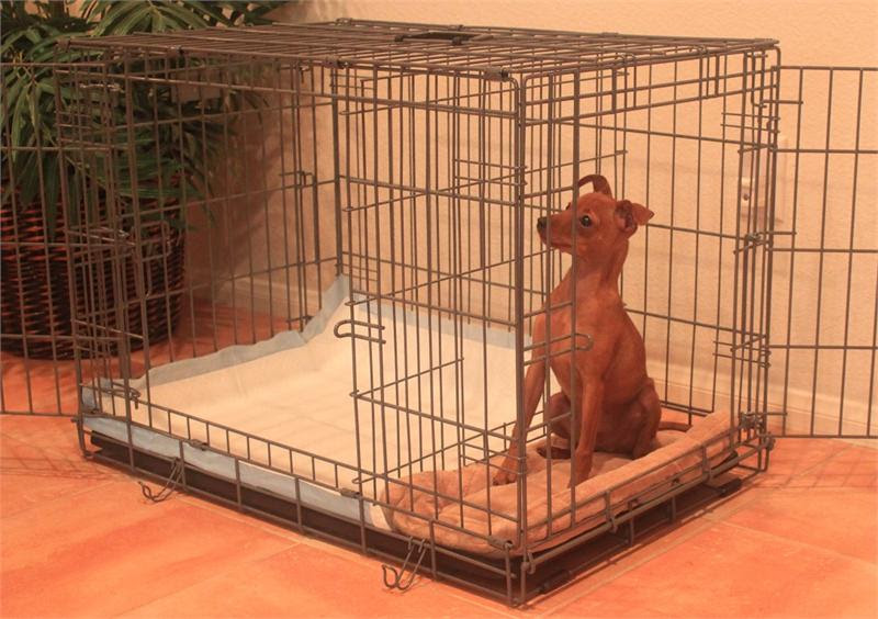 Ptpa Sizes Products Links Reviews Breeders Faqs Videos Puppy Potty Training