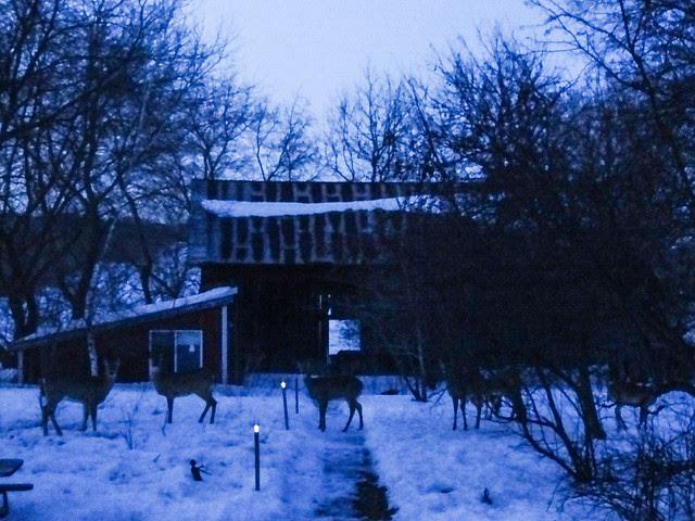 farmette winter-16.jpg