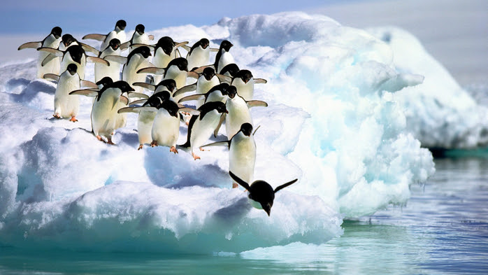 penguins3 (700x393, 325Kb)