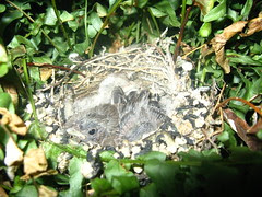 Birds in the hanging fern
