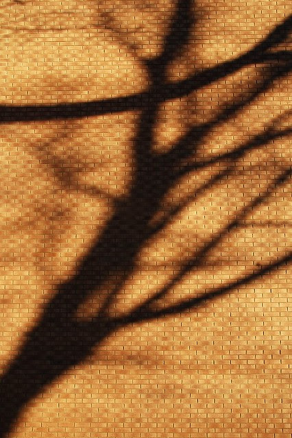 Shadows of a tree on a warm brick building.