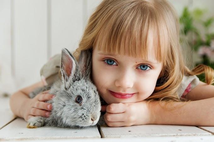 3 bài học từ 3 câu truyện rùa và thỏ