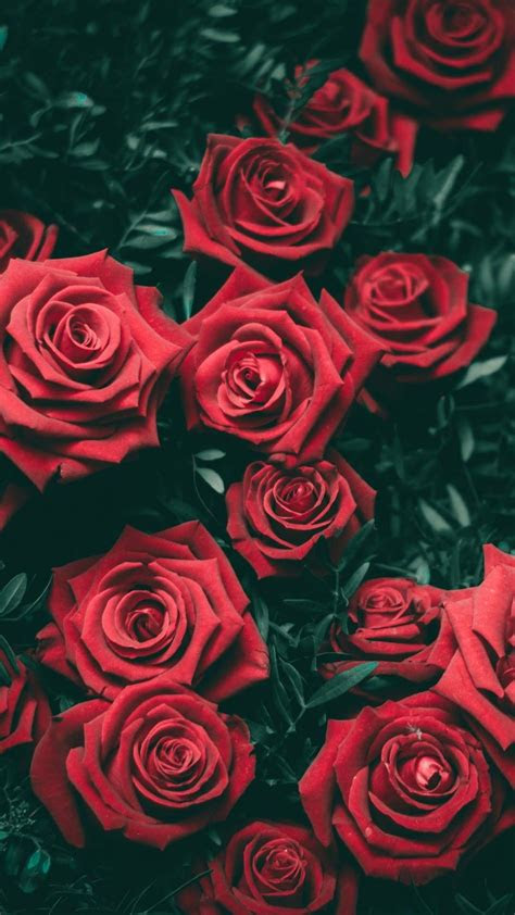 red rose wallpaper awesome mobile wallpaper flowers