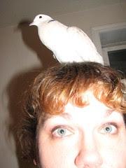 Dove on my head