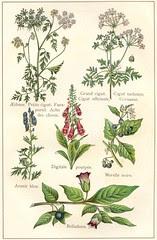 plantes veneneuses 2