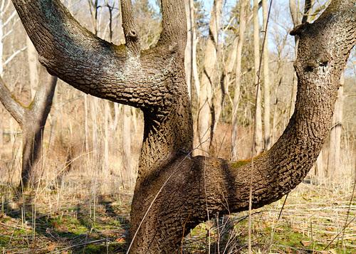 Numeral Tree