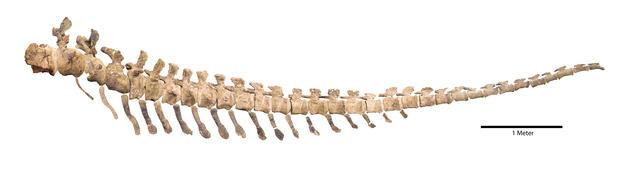 Resultado de imagem para tail velociraptor fossil