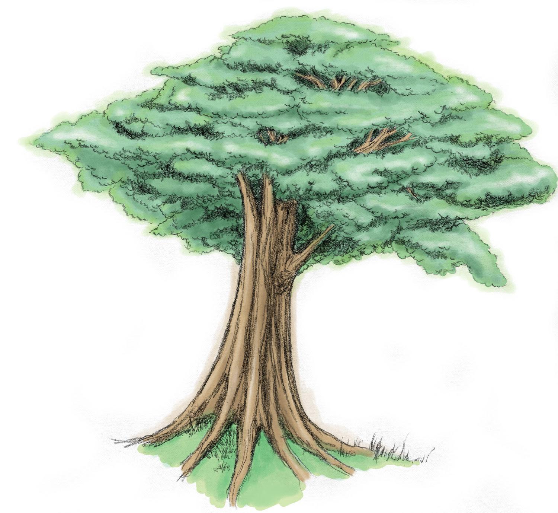 Contoh Gambar Ilustrasi Tentang Pohon