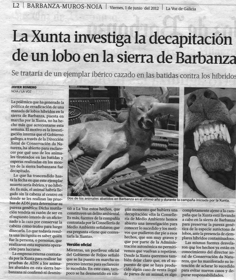 Asesinos De Lobos En El Barbanza Xxi Lobos Decapitados Los