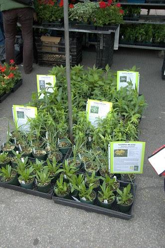 Native Plants at Oak Grove Farms
