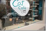 photo Catcafe-10_zpse01e5506.jpg