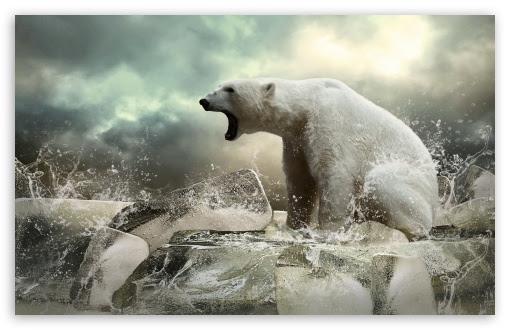 Polar Bear On Ice 4K HD Desktop Wallpaper for 4K Ultra HD TV u2022 Dual Monitor Desktops u2022 Tablet