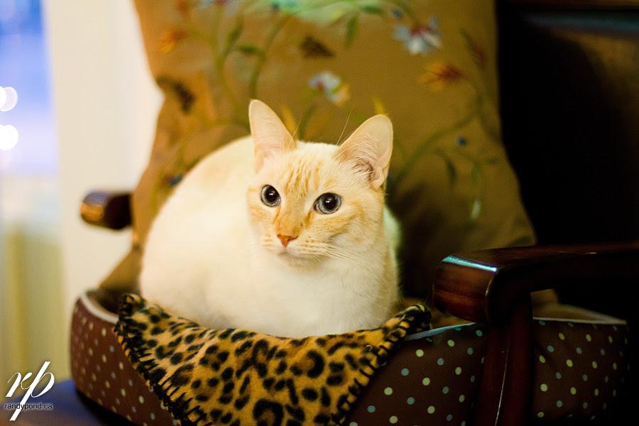 ~ 357/365 Kitty ~
