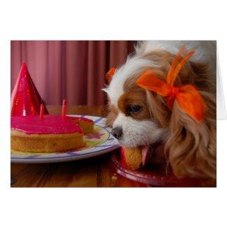 Renae Birthday Cavalier Spaniel Card