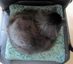 fuzzy-circle-cat1