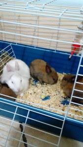 conigli aidaa 3