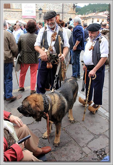 5 Feria de ganado en Potes 2013