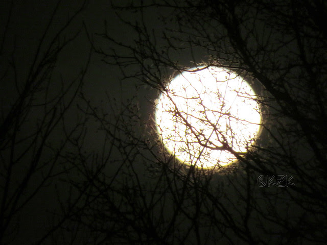 IMG_1188 full moon