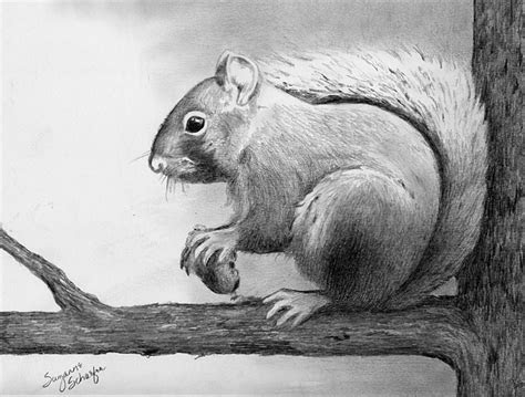image result  easy pencil drawings  animals