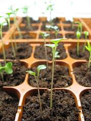 #96 - Look how my garden grows