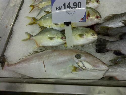 Ikan Ayam by rizauddin