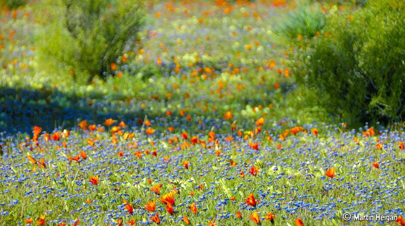 Namaqua Park