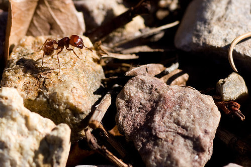 big_red_ant_rocks