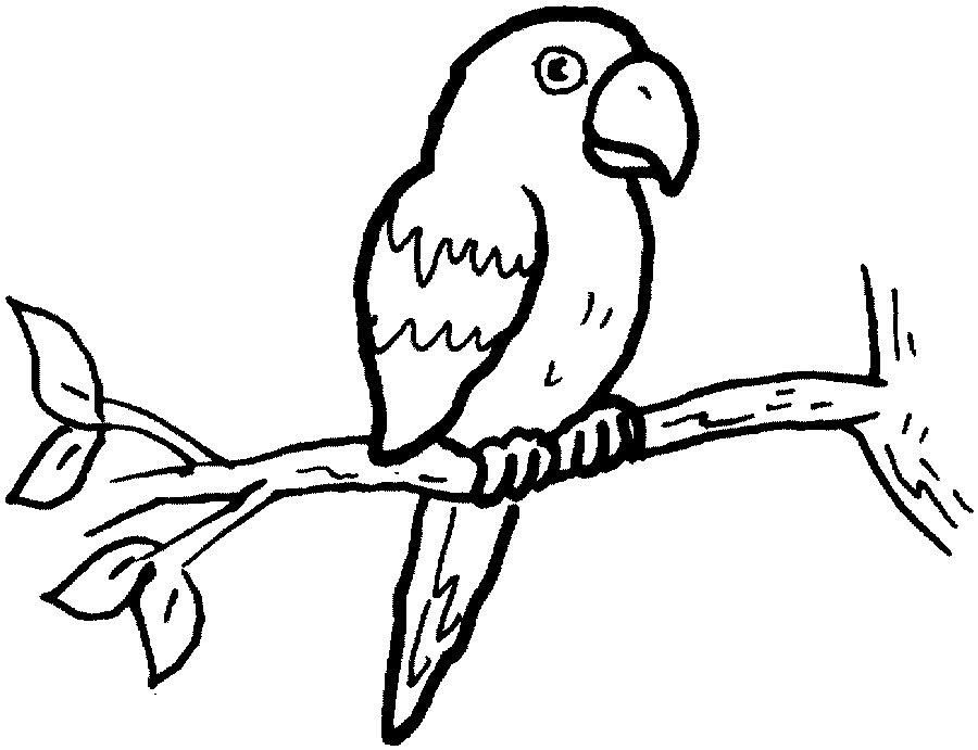 parrot clipart parrot